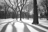 Central Park Trees and Shadows In Snow - NYC Park Wall Decal by Henri Silberman