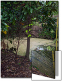 Egret by Pond, Duke Gardens, Durham, NC (Water Bird, Botanical Gardens, South) Print by Henri Silberman
