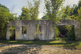 Ruin of House with Trees (Roxboro, NC) Wall Decal by Henri Silberman