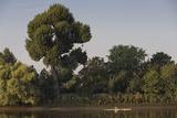 Skulling on the Thames River (London Scene) Seinätarra tekijänä Henri Silberman