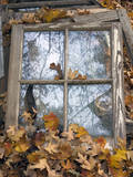 Window Frame and Autumn Leaves (Still Life, North Carolina) Wall Decal by Henri Silberman