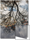 Tree Reflection and Goldfish Print by Henri Silberman