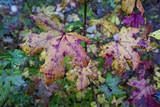 Fall Leaves, Close-Up (North Carolina Woods) Sticker mural par Henri Silberman