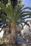 Palm Tree in Front of House (Oakland, CA) Wall Decal by Henri Silberman