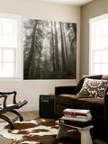 Trees in Fog 3 Fototapete von Henri Silberman