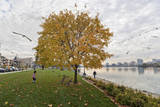 Lake Merritt in Fall Wall Decal by Henri Silberman