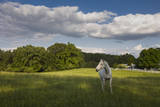White Horse in Field with White Clouds Adhésif mural par Henri Silberman