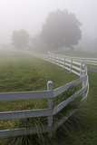 White Fence and Grasses, Chapel Hill, NC (Fog) Wall Decal by Henri Silberman