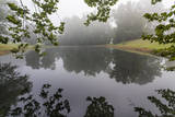 Trees and Branches Reflecting in a Pond on a Foggy Morning Muursticker van Henri Silberman