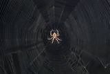Spider Web Wall Decal by Henri Silberman
