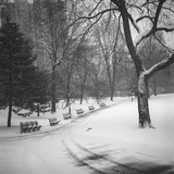 Central Park Benches - Central Park, NYC in Snow Wall Decal by Henri Silberman