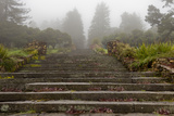 Stone Steps, Joaquin Miller Park, Oakland, CA (Urban Park, Fog) Wall Decal by Henri Silberman