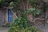 Fig Tree Against Brick Wall Blue Door Wall Decal by Henri Silberman