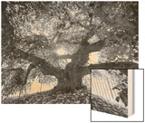 Under the Camperdown Elm Prospect Park Print by Henri Silberman