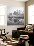Prospect Park Lake In Morning - Brooklyn Landscape Wall Mural by Henri Silberman