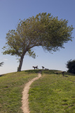 Point Isabel, CA (Dog Park) Wall Decal by Henri Silberman