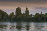 Sunset Skulling on Thames River, London (Exercise, Water Recreation, Hammersmith) Seinätarra tekijänä Henri Silberman