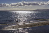 Seagulls on Sand Dune Autocollant par Henri Silberman
