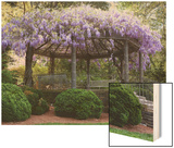 Wisteria Arbor, Duke Gardens, Durham, NC (Purple Spring Flowers) Posters by Henri Silberman