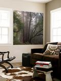 Trees in Fog 1 Fototapete von Henri Silberman