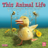 This Animal Life - 2016 Calendar Calendars