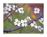 Dogwood 3 Giclee Print by Ken Bremer
