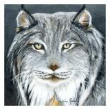 Lynx Prints by Sylvia Audet