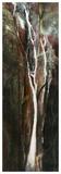 Lueur de la forêt Poster by Kathleen Cloutier