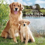 Golden Retrievers - 2016 Calendar Calendars