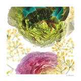 Ranunculus Giclee Print by Kate Blacklock