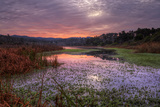 Marsh Sunrise at Fort Bragg, California Coast Photographic Print by Vincent James
