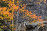 Apricot Fall Color and Granite Design, New England Photographic Print by Vincent James