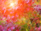 Japanese Maples in Autumn Design Kunst op metaal van Vincent James