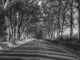 Tree Tunnel to Old Koloa Town (B/W), Kauai Hawaii Metal Print by Vincent James