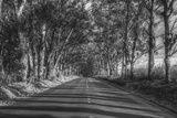 Tree Tunnel to Old Koloa Town (B/W), Kauai Hawaii Photographic Print by Vincent James
