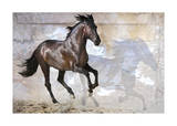 Shadow Premium Giclee Print by Susan Friedman