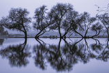 Reflection Ballet, Winter in Marin County, California Photographic Print by Vincent James