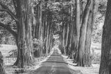 Sonoma Tree Tunnel, Northern California Photographic Print by Vincent James