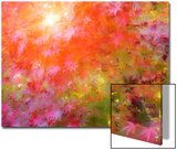 Japanese Maples in Autumn Design Posters av Vincent James
