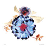 Translucent Dahlia Giclee Print by Kate Blacklock
