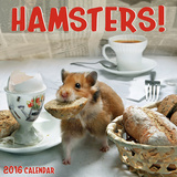Hamsters - 2016 Calendar Calendars