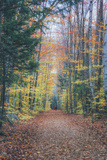 Autumn Walk Through the White Mountains, New Hampshire Photographic Print by Vincent James