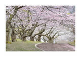 Blossom Hill Giclee Print by James Gordon