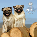 Pugs  - 2016 Calendar Calendars
