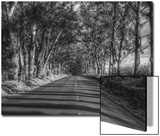 Tree Tunnel to Old Koloa Town (B/W), Kauai Hawaii Posters by Vincent James