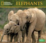 Elephants - 2016 Calendar Calendars