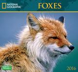 Foxes - 2016 Calendar Calendars