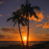 Palm Trees and Setting Sun (Square), Kauai Hawaii Photographic Print by Vincent James