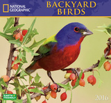 Backyard Birds - 2016 Calendar Calendars