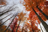 Late Autumn Tree Tops, New Hampshire Photographic Print by Vincent James